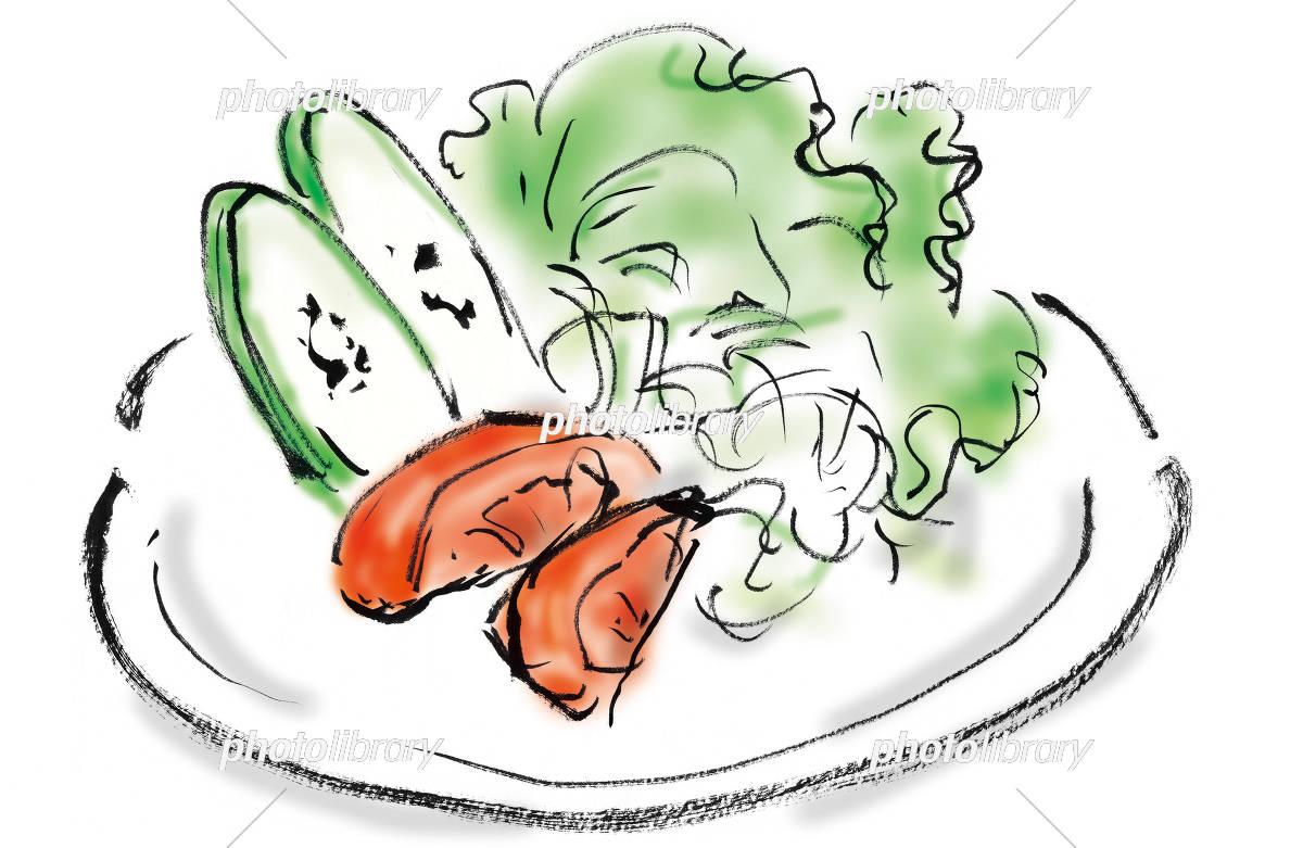 野菜サラダ イラスト素材 5519587 フォトライブラリー Photolibrary