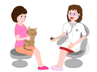 A cat of a pet who is being examined by a veterinarian. A