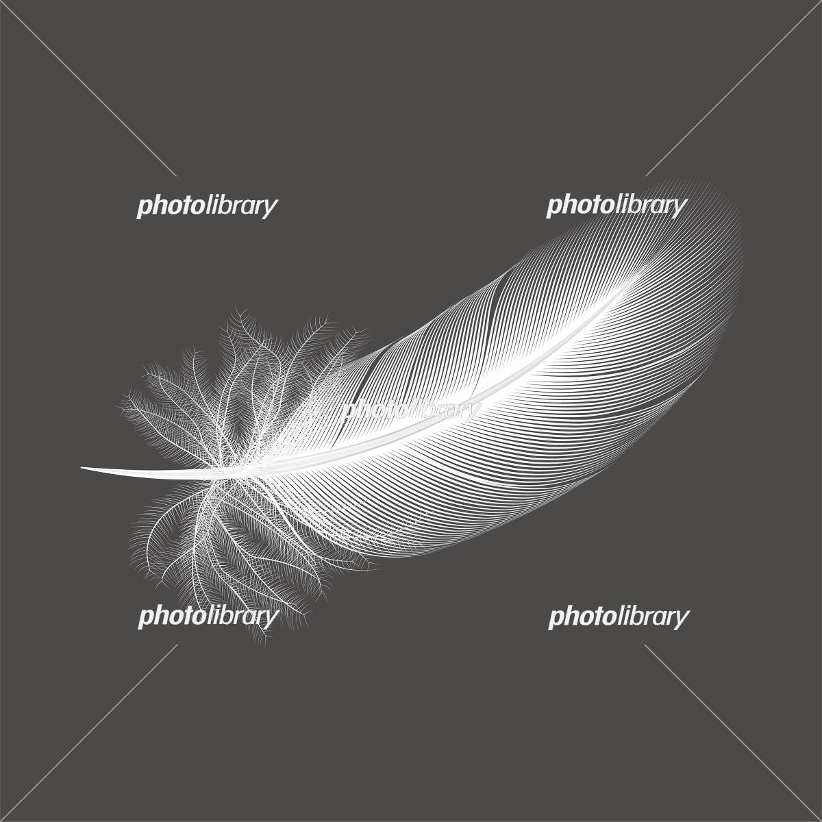 鳥の白い羽根 イラスト素材 5560205 フォトライブラリー Photolibrary