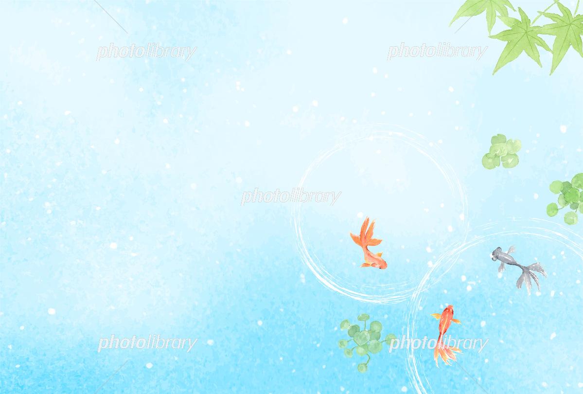 夏の背景イラスト 金魚と青もみじ イラスト素材 フォトライブラリー Photolibrary