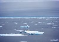 Arctic ice floe polar bear Stock photo [302846] Arctic