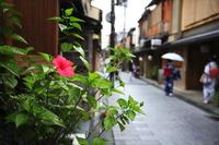 Summer of Gion Stock photo [302977] Flower