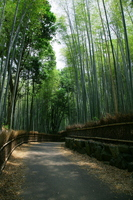 Road of Kyoto Sagano of bamboo forest Stock photo [308696] Kyoto