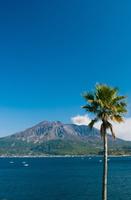 Sakurajima noon Jing Stock photo [310503] Kagoshima