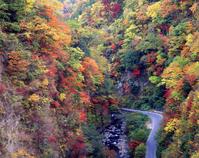 Autumn leaves of KyuKei Stock photo [358695] Autumn